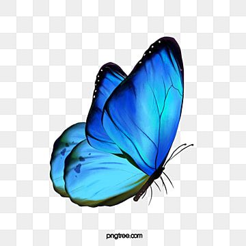 Pink Butterfly Vector Antena Insecto Pink Png Y Psd Para Descargar Gratis Pngtree In 2021 Butterfly Clip Art Butterfly Background Cartoon Butterfly