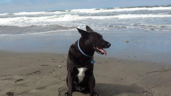 Shaman at Fort Funston beach