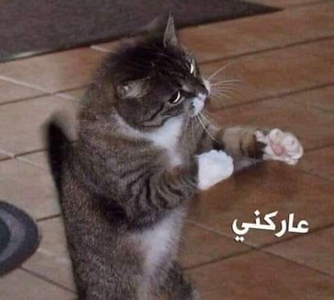 Pin By Aml Moustafa On Comics Funny Art Memes Funny Cartoon Quotes Funny Photo Memes