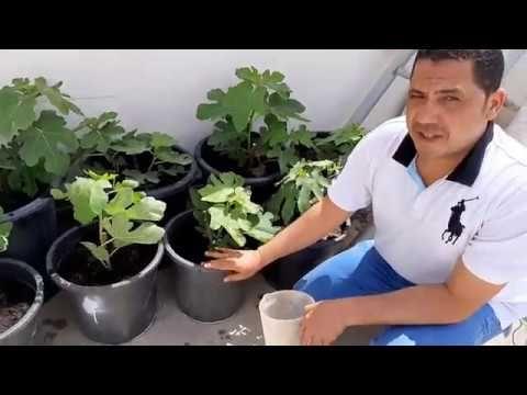 طريقة تحضير اقوي سماد طبيعي عام لجميع النباتات باختلاف مراحلها بديل لسماد Npk Youtube Plants Planter Pots Planters