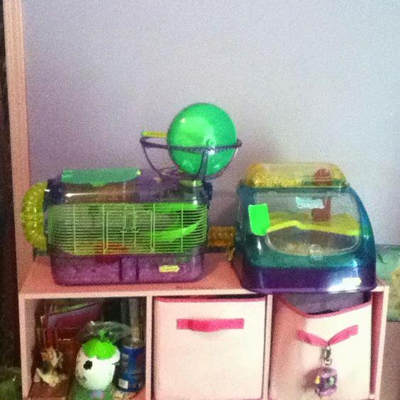 Hamster penthouse