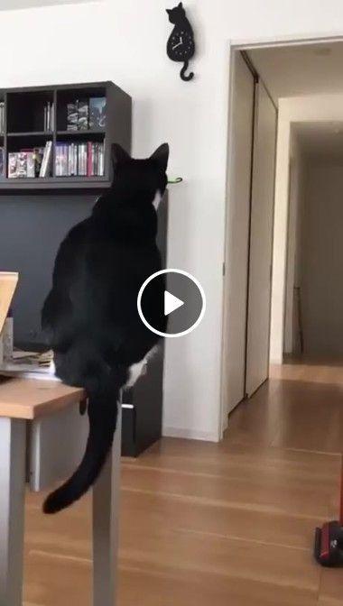 O gato não está gostando de ver o relógio de gato