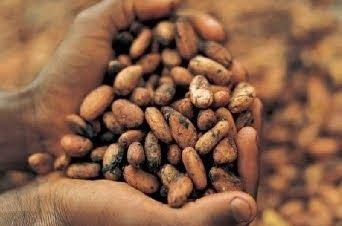 Produtores de cacau provam chocolate pela primeira vez ~ curiosityFlux
