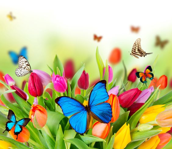 Spring flowers desktop background wallpaper free for Fondo de pantalla primavera