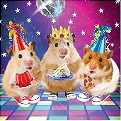 3d Holographic Birthday Card Funny Disco Hamsters Party Cute Greeting Card Amazon Co Uk Office Products Cute Hamsters Pet Holiday Funny Hamsters