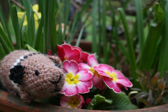 crochet Guinea pig ( cute!!!)
