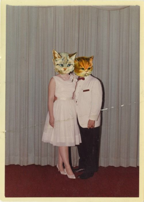 Meow Prom.