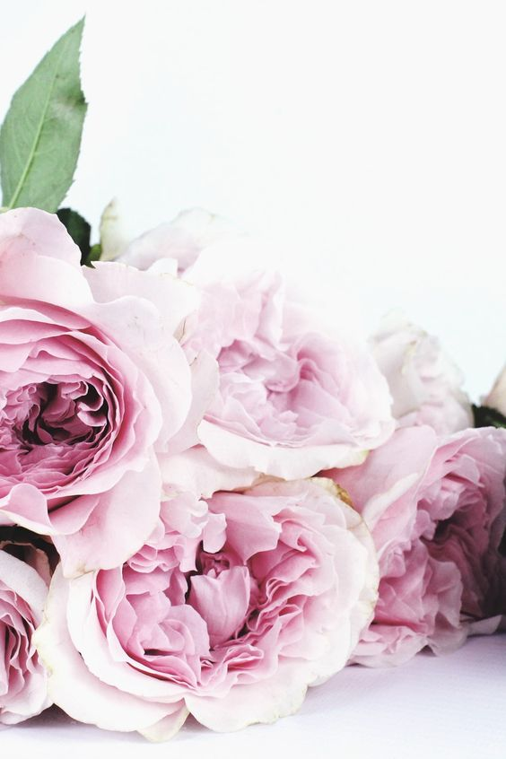 Submission by The Smell of Roses. Check out The Smell of Roses's profile: https://www.pexels.com/u/the-smell-of-roses-33562/ #flowers #petals #leaves