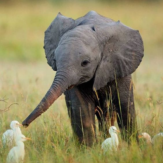 Happy #worldkindnessday! Let's all vow to be kinder to #nature. Tag your friends in this picture to share the kindness . Image via BuzzFeed. #elephant#babyanimals#babyelephant