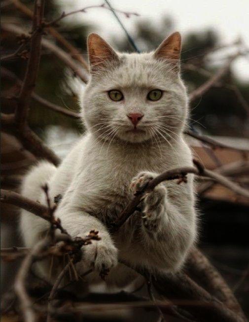 Beautiful Cats For Sale In Pakistan Beautiful Siamese Cats Cute