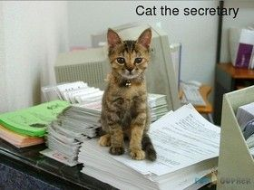 Funny-Animals-Cat-the-secretary.jpg (280×210):
