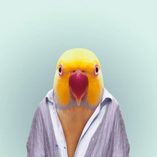 Yago Partal, Zoo portrait: parakeet