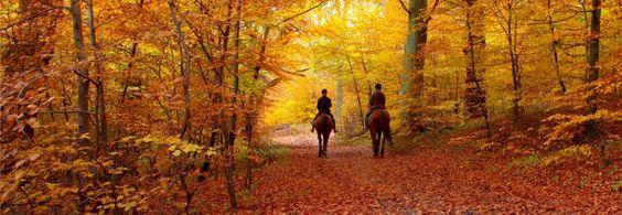 Umstellungen in Herbst und Winter - Amofela