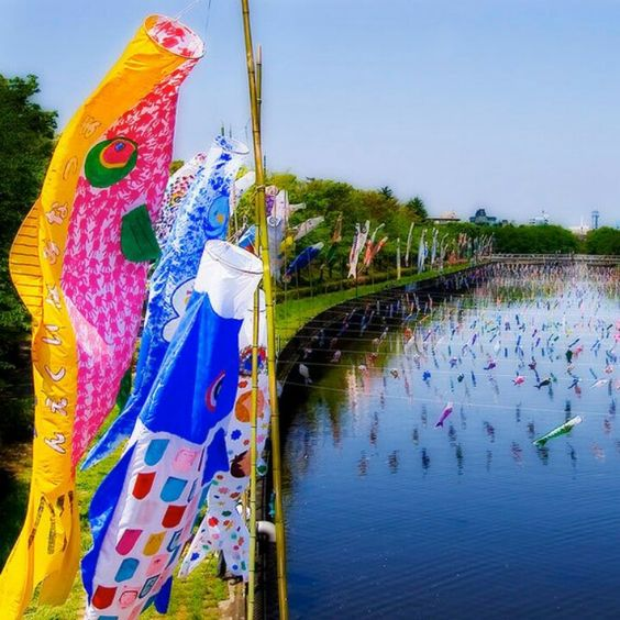 °°*° from Alafista: beautiful carp streamers called Koinobori (鯉幟).  These carp-shaped wind socks traditionally flown in Japan to celebrate Tango no Sekku (端午の節句), a traditional calendrical event which is now designated a national holiday; Children's Day.These wind socks are made by drawing carp patterns on paper, cloth or other nonwoven fabric.