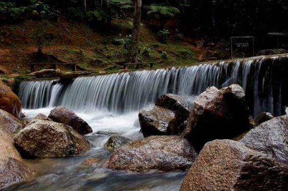 Foto tirada na Floresta Nacional de Passa Quatro (antigo Instituto do Pinho).