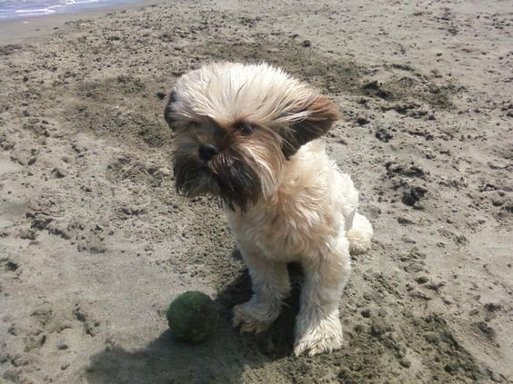 Buddha, enjoying a day at the beach the wind blowin in his hair