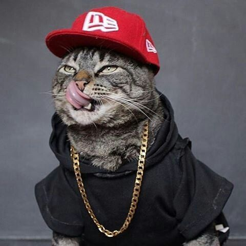 Além de Gato é estiloso.  Bonés exclusivos você só encontra aqui: <a href=
