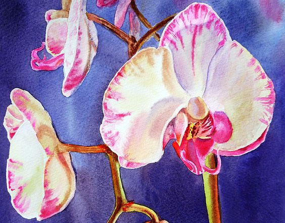 Festive Orchid Pink And White' - http://fineartamerica.com/featured/festive-orchid-pink-and-white-irina-sztukowski.html #orchid #painting #orchidart #realism #watercolor #artwork #buyprint #floral #art
