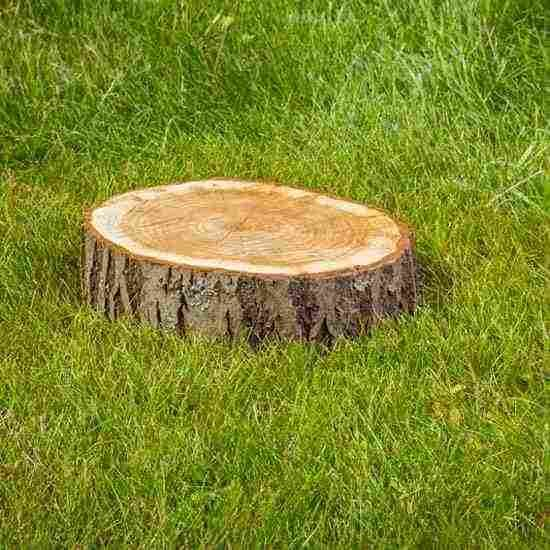 How To Rot A Stump For Easy Removal Diy Garden Pests Tree