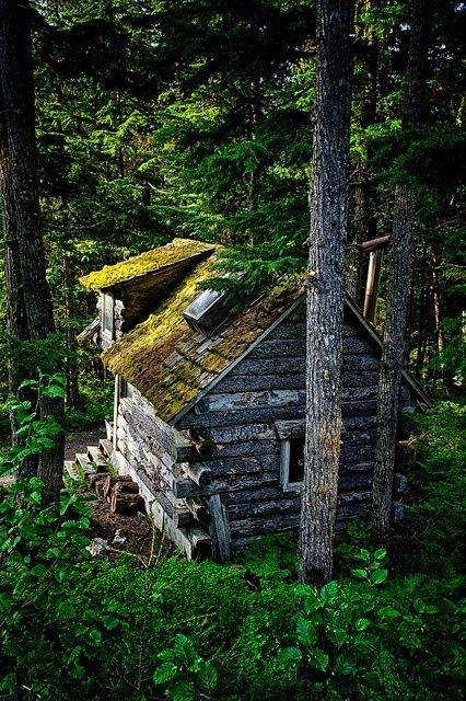 Forest Cabin, Girdwood, Alaska. The North is filled with abandoned cabins: miner's cabins, trapper's cabins, indigenous people's cabins, on and on. The cold and dry weather can keep them preserved for years and years.