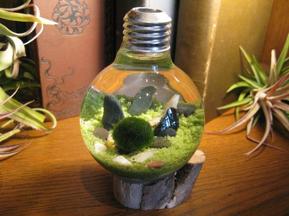 Marimo Terrarium by Midnight Blossom Reclaimed Light Bulb with