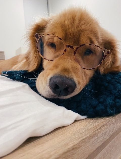 Charlottekrieger Relatablemoods In 2020 Best Dog Toys Big Dog