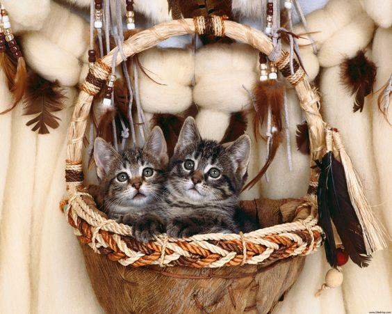 Gaticos en Canasta