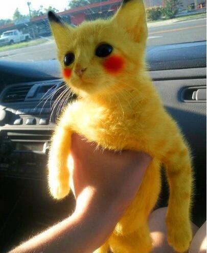 sphynx cat gif