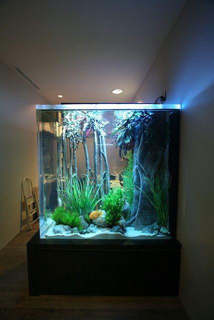 500 Gallon Freshwater   Flickr - Photo Sharing!