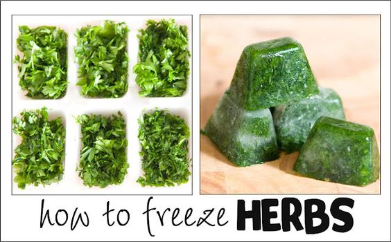 Get all the info on how to prepare and freeze fresh herbs