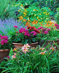 vibrant backyard garden!