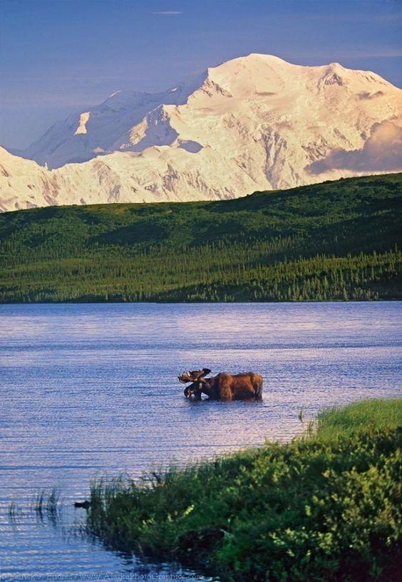 Alaska Wildlife photo gallery - Alaska Photography Blog - Patrick Endres