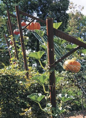 """Pumpkin hammock - Each pumpkin vine had been trained up a metal pole, its lone fruit deposited on the net for safekeeping. The pumpkins, poised over a Lilliputian garden world (""""hills of parsley, valleys of lettuces, rivers of origanum""""), are meant to symbolize the daily course of the sun."""