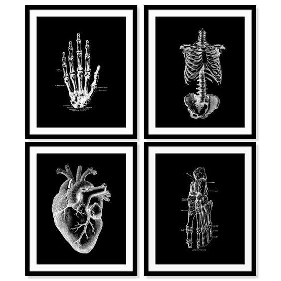 human anatomy prints