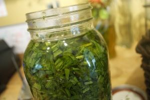 How to Make Medicinal Oils (Cold Infusion)