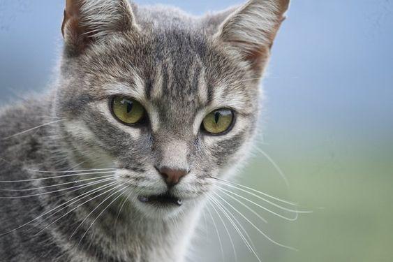 20 ペットくすりwebさん Petkusuriweb Twitter Feline Animals Cats