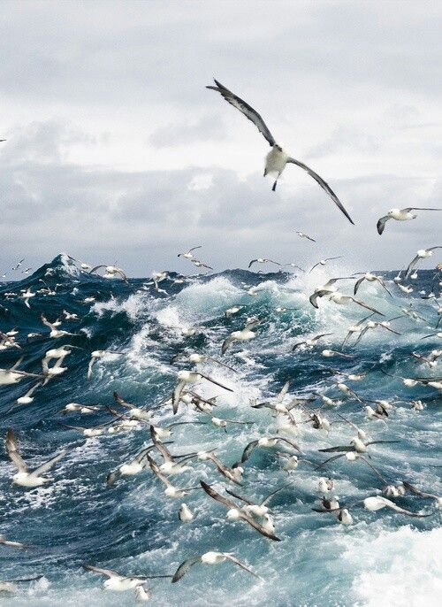 Seagulls on the waves