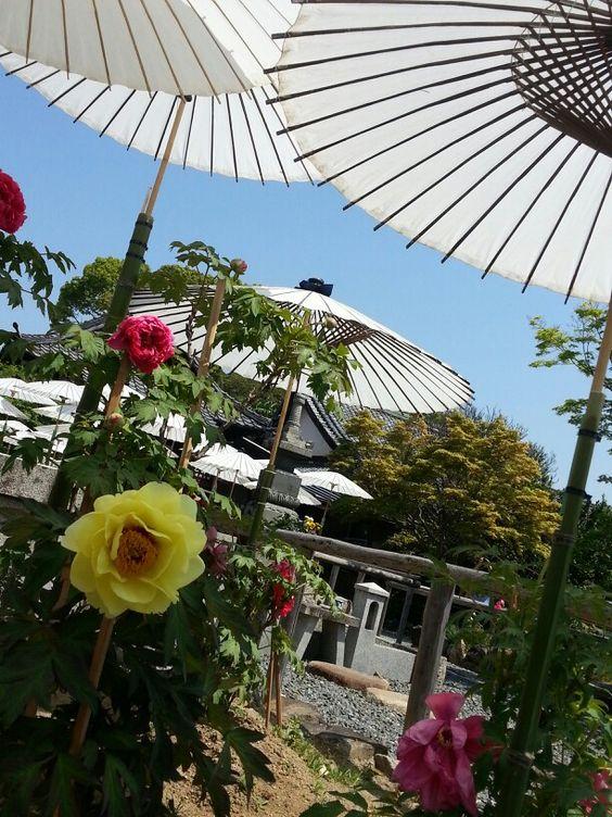 京都乙訓寺の牡丹
