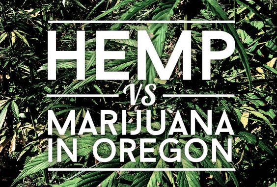Make Hemp A Part Of Your Everyday Oregon medical marijuana farmers worried about neighboring farmers growing hemp. Hemp should be grown in all the states.