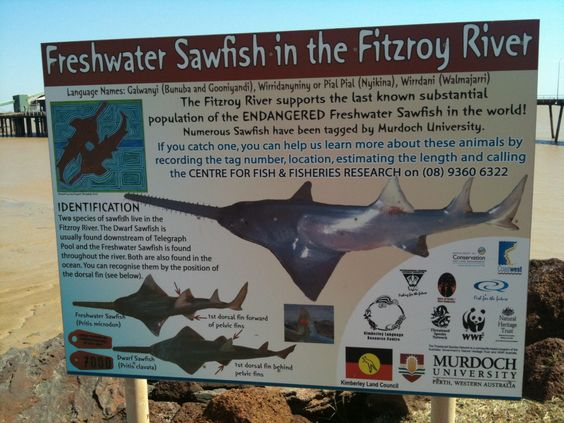 A sign near the jetty, Derby, WA, highlighting sawfish endemic to the Fitzroy River, which flows into King George Sound. 12 May 2011.