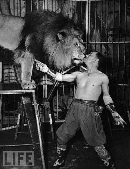 Kissing the lion