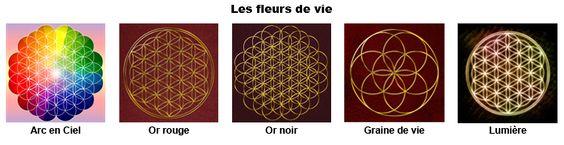les-fleurs-de-vies.png (700×180):