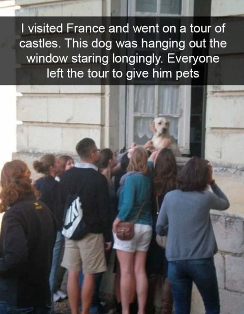 28 Funny Dogs To Brighten Up Your Day Brighten Day Dogs Funny Humor Lustige Hunde Lustige Tierwitze Tierwitze