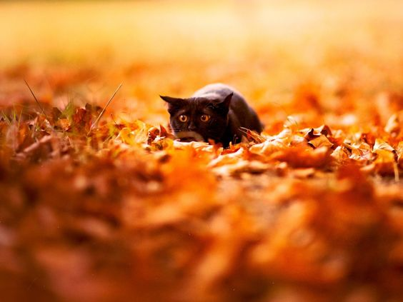 1024x768 Wallpaper cat, leaves, autumn, nature, background, color, bright