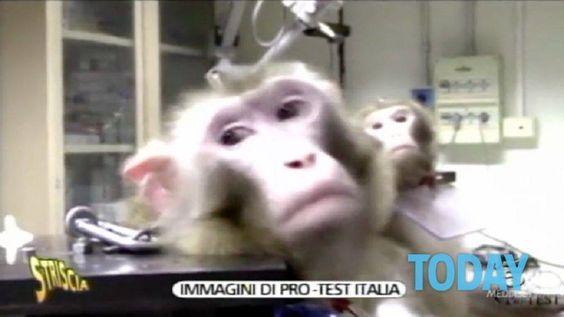 """Petition: NO VIVISEZIONE ALL 'UNIVERSITÀ """"LA SAPIENZA"""" DI ROMA >…"""