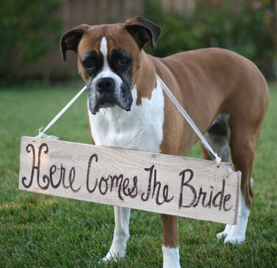 I can actually see my Boxer Penny doing this at my wedding! Puppy Flower Girl