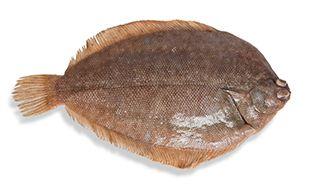 cá bơn nhập khẩu