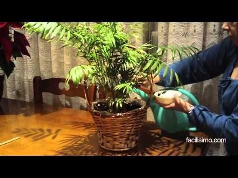 Cómo fortalecer las plantas | facilisimo.com