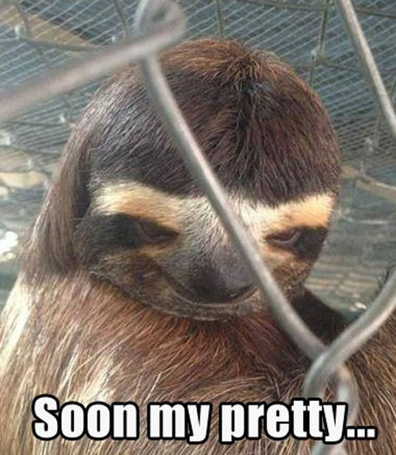 Funny Pictures Of Animals | when I see my crush and im lurking in the corner like...