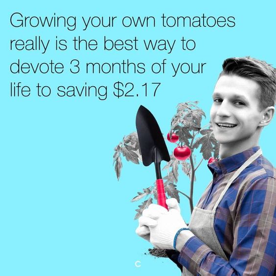 I'm sure a bag of soil, pot, fertilizer, and plant cost more than I spent on tomatoes in a year.